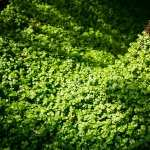 Clover wallpapers for android