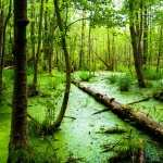 Swamp wallpapers hd