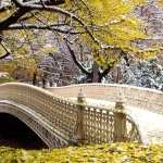 Central Park widescreen