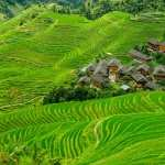Rice Terrace wallpapers for iphone