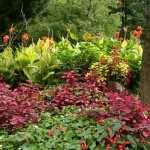 Garden 1080p