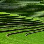 Rice Terrace new wallpapers