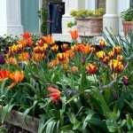 Garden high definition photo