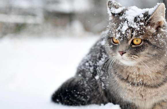 Cat Winter