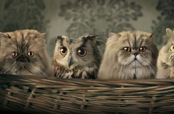 Cats And Owl