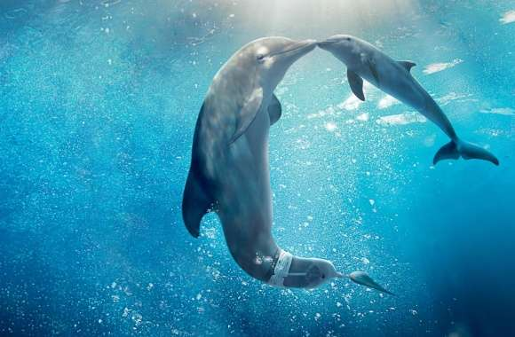 Dolphin Tale 2 Movie 2014