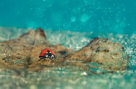 Ladybird Under Rain wallpapers hd quality