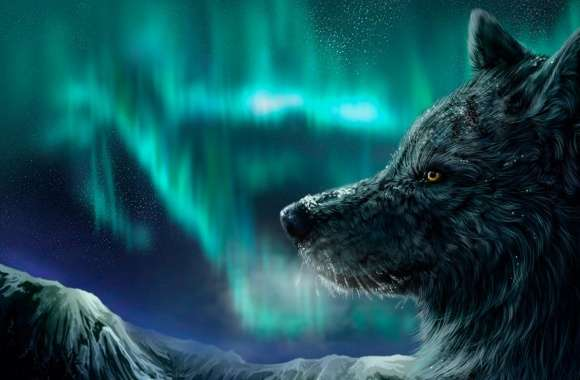 Mountain Wolf wallpapers hd quality