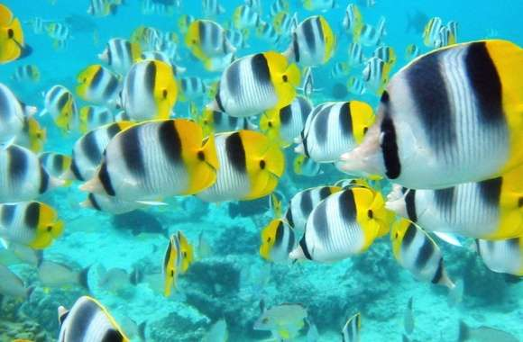 School Of Tropical Fish Tahiti