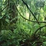 Jungle widescreen