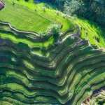 Rice Terrace wallpapers for android