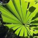 Jungle high definition photo