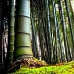 Bamboo widescreen