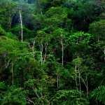 Jungle new photos