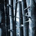 Bamboo hd desktop