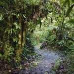 Jungle hd
