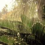 Jungle pic