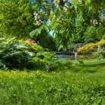 Garden new photos