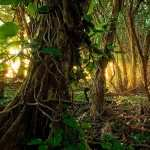 Jungle full hd
