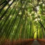 Bamboo PC wallpapers