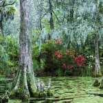 Swamp full hd