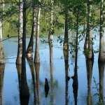 Swamp 1080p