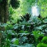 Jungle hd pics