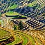 Rice Terrace PC wallpapers
