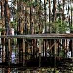 Swamp photos