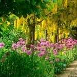 Garden full hd