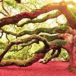 Angel Oak Tree new wallpapers