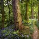 Path free