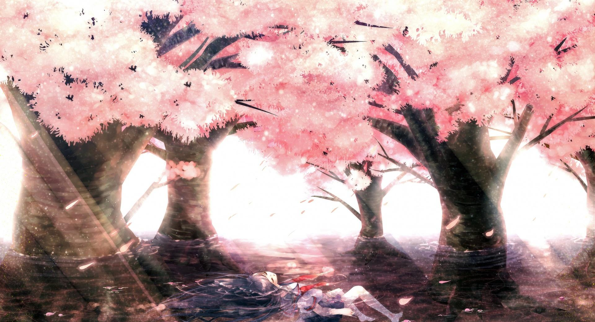 Cherry Tree Blossoms wallpapers HD quality