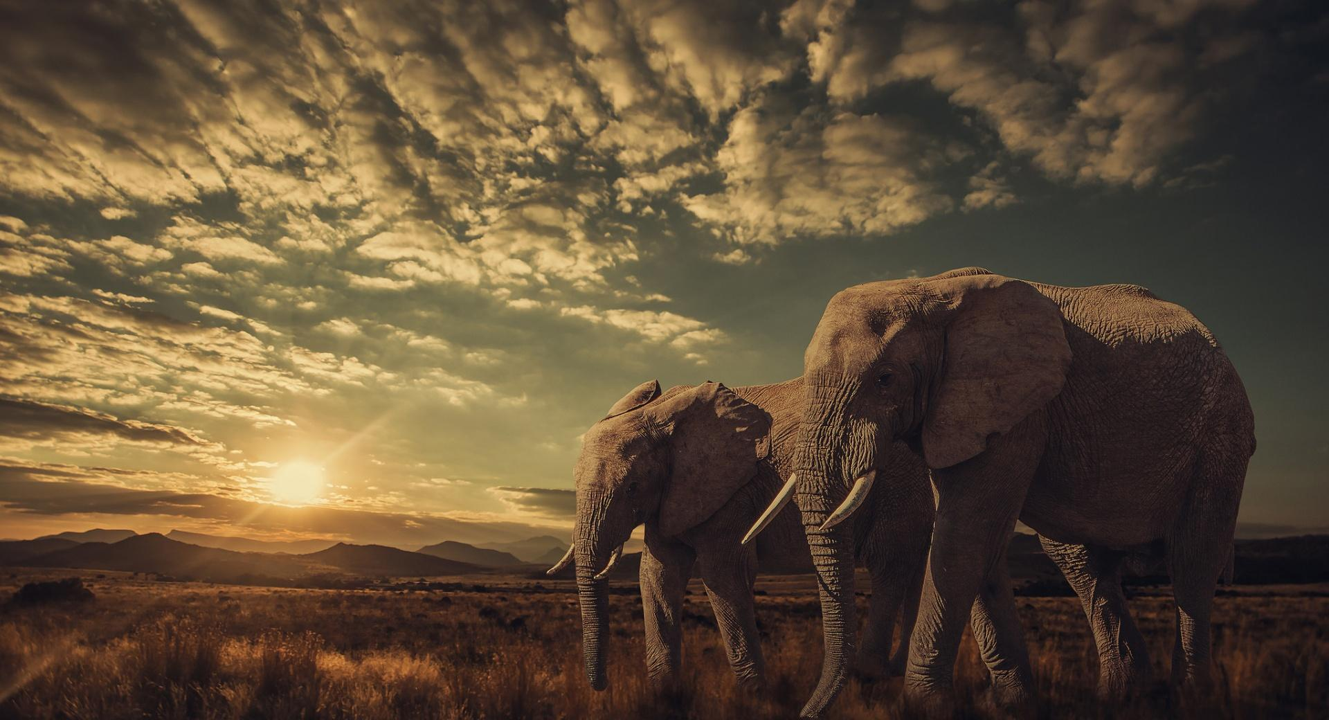 Elephants, Sunset, Nature wallpapers HD quality