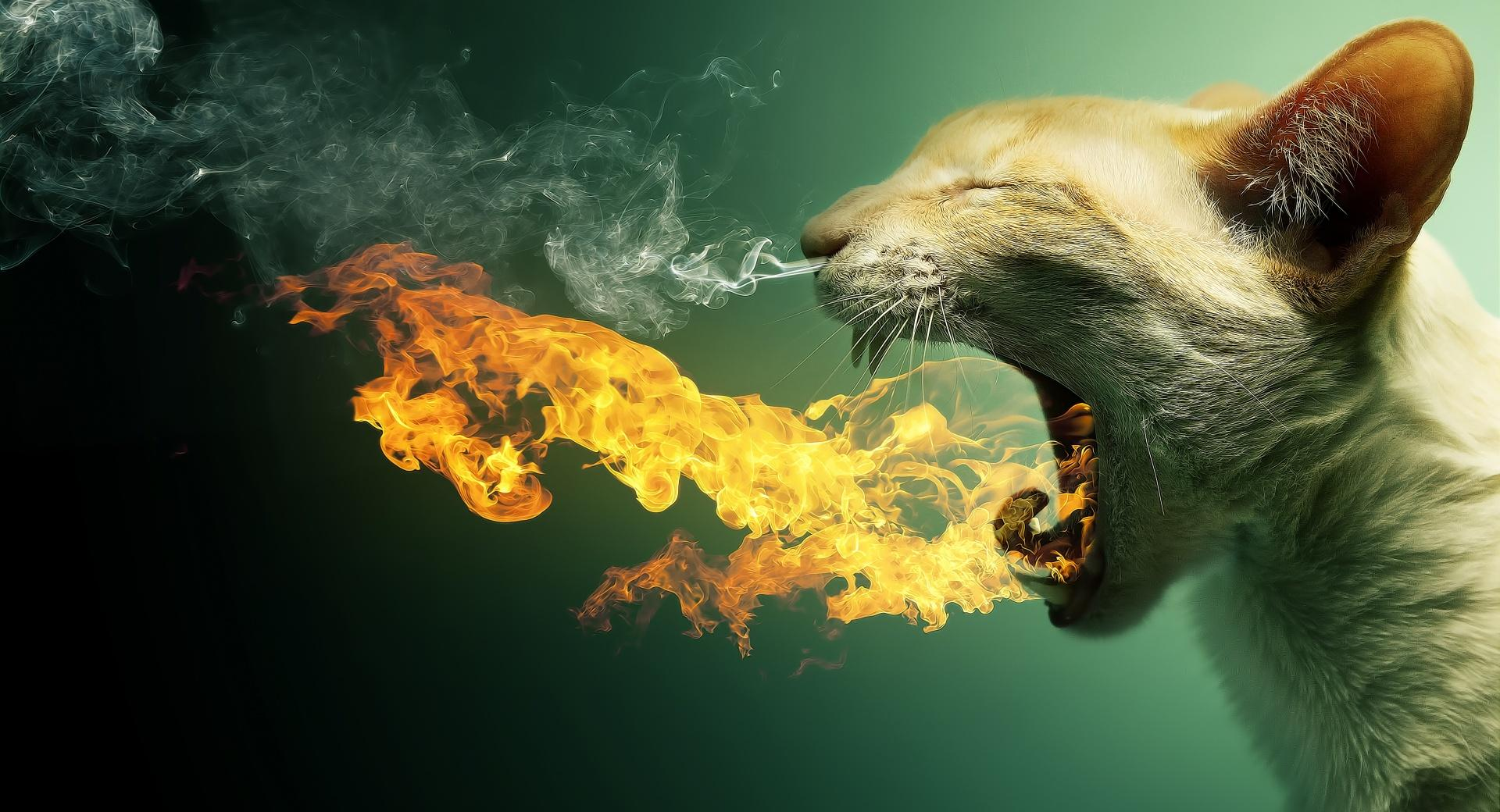 Flaming Cat wallpapers HD quality