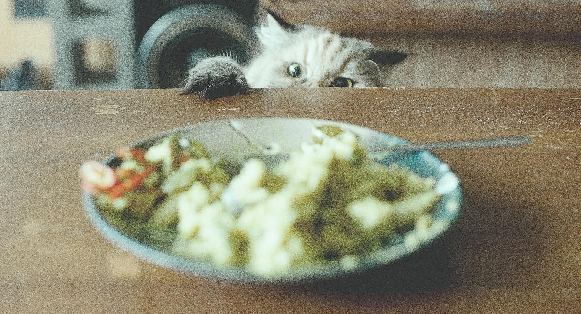 Food Thief wallpapers HD quality