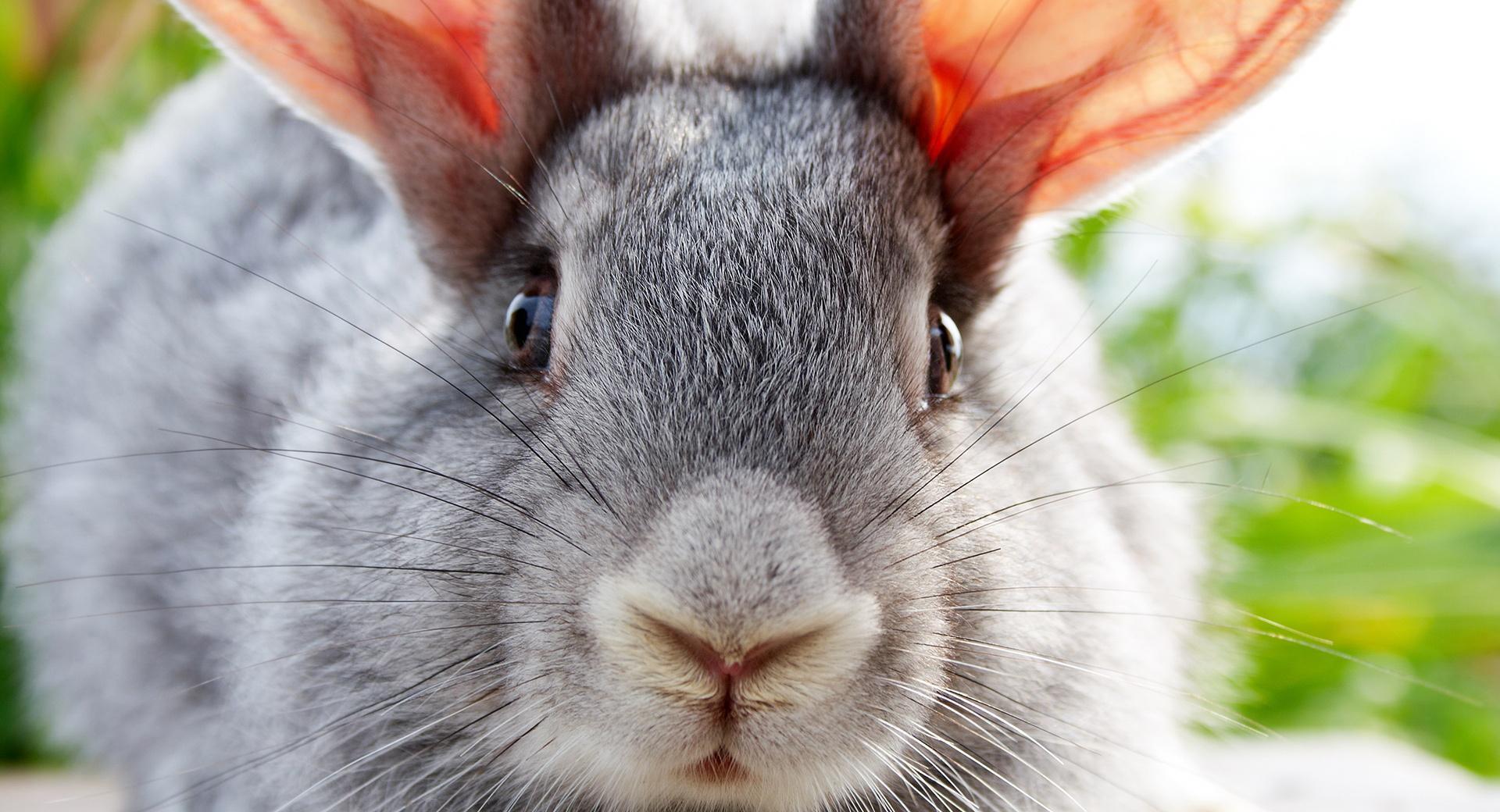 Кролик макро  № 3207713  скачать