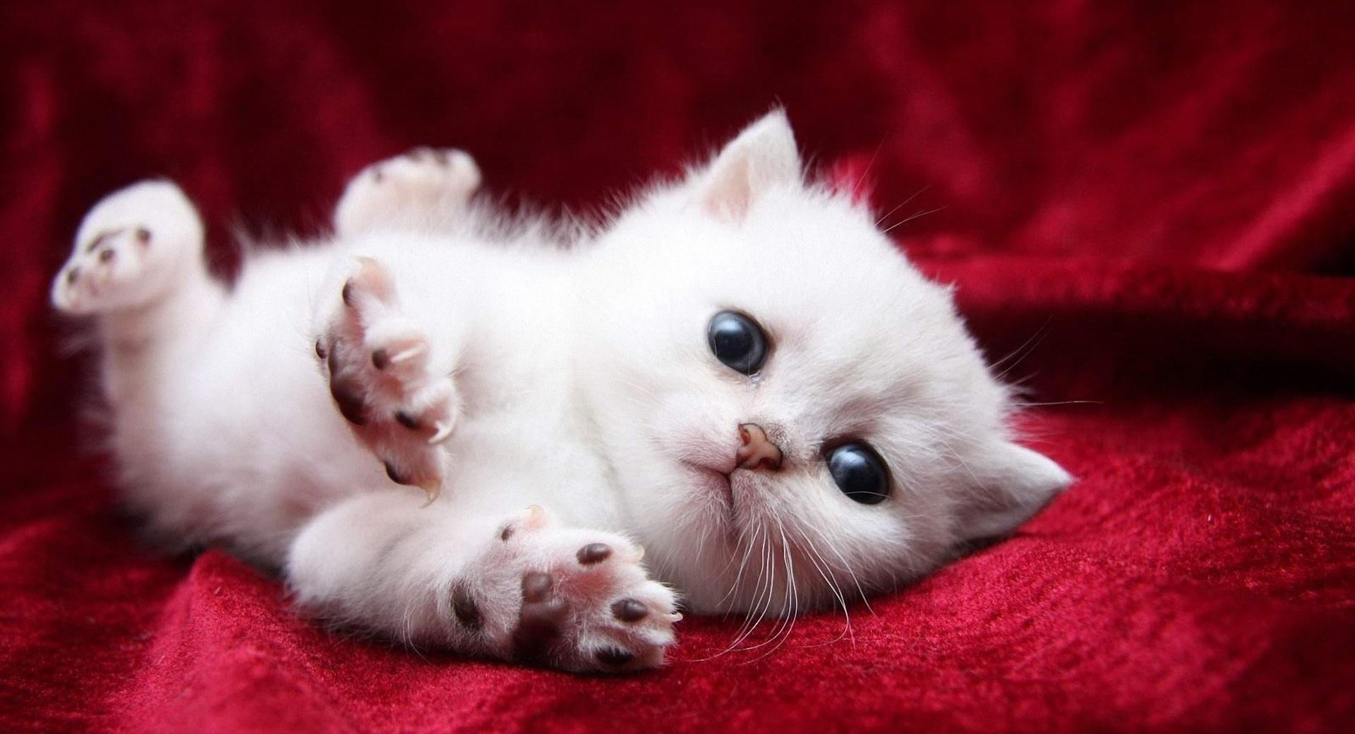 Kitten Begging Cutely wallpapers HD quality