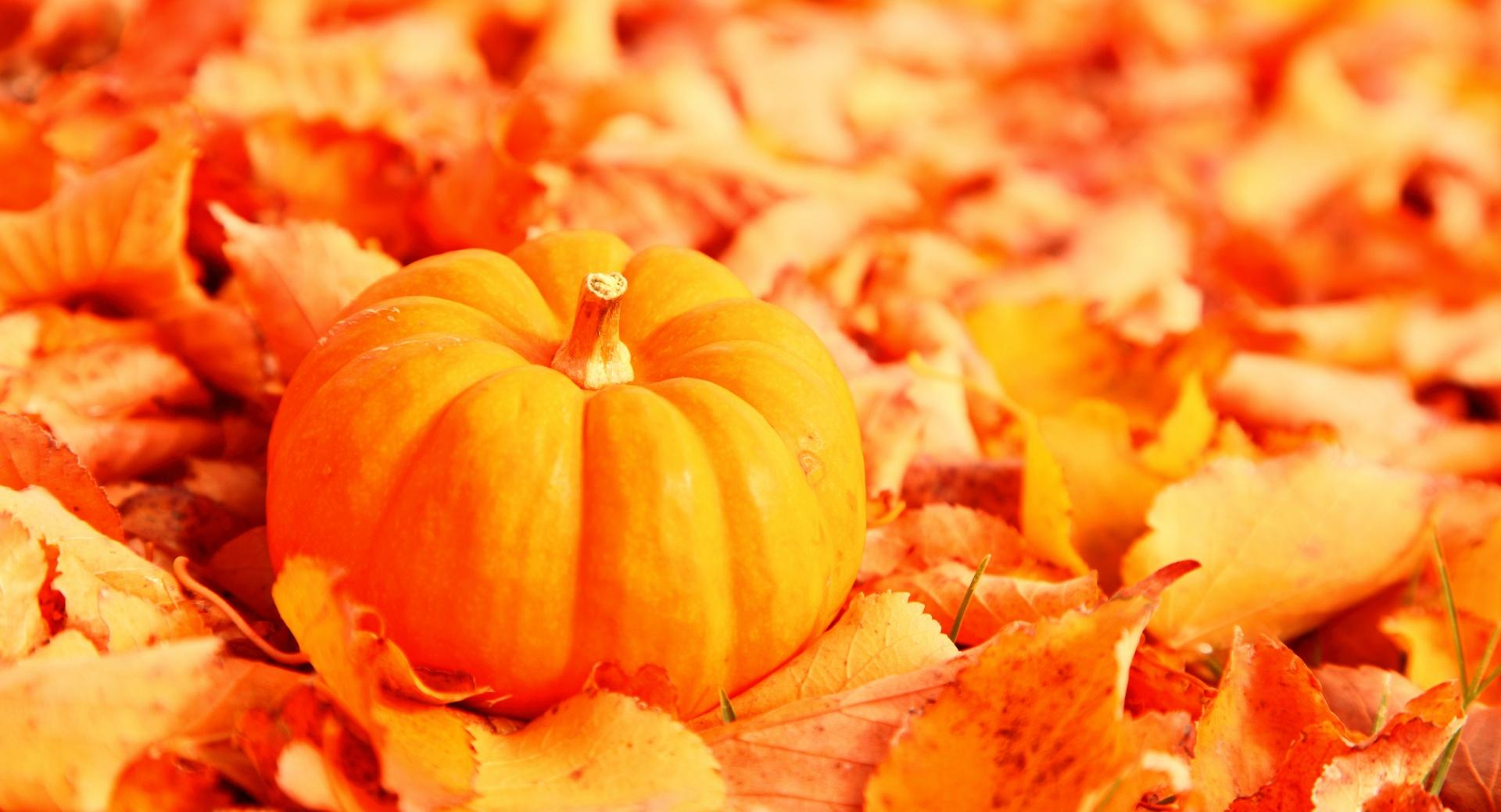 Pumpkin And Autumn Leaves wallpapers HD quality