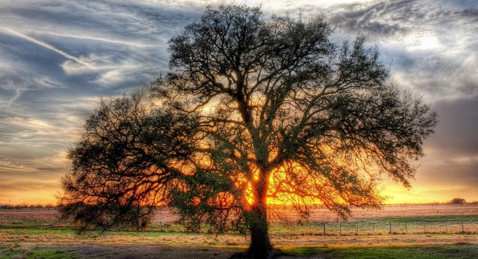Sunlight Tree wallpapers HD quality