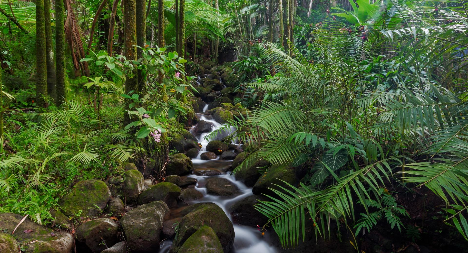 Tropical Stream wallpapers HD quality