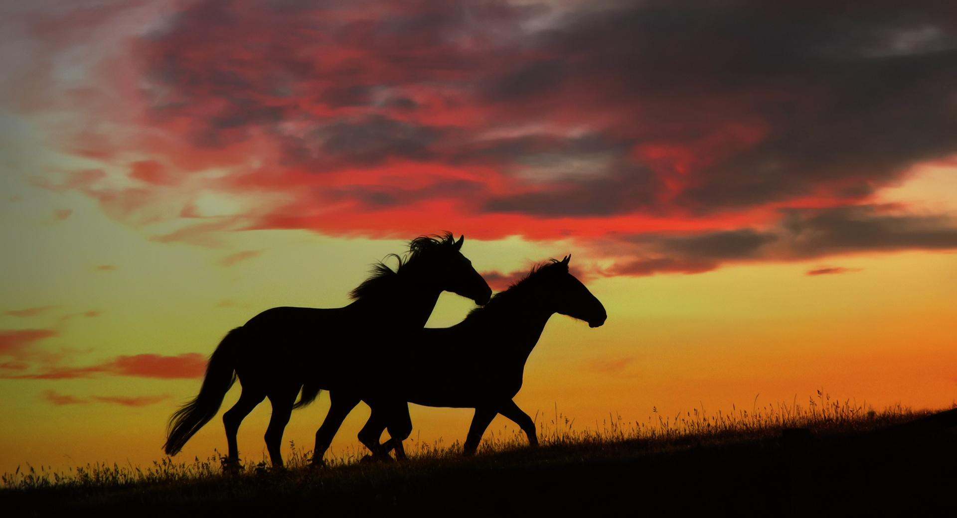Wild Horses Running wallpapers HD quality