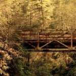 Bridge images