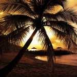 Tropical pics