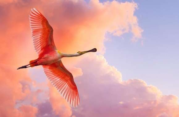 Beautiful Birds Flying wallpapers hd quality