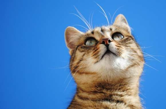 Cat, Blue Sky wallpapers hd quality