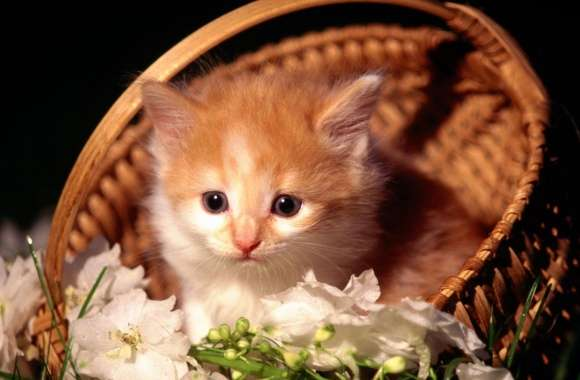 Cute Kitten In Basket wallpapers hd quality