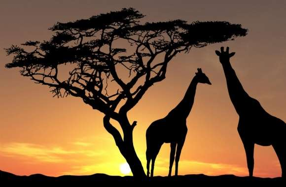 Giraffes In The Sunset wallpapers hd quality