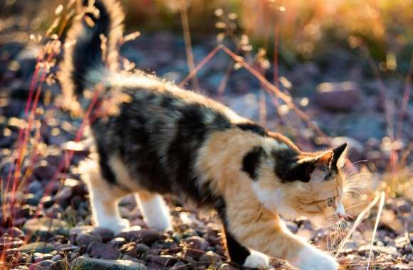 Playful Calico Kitten wallpapers hd quality