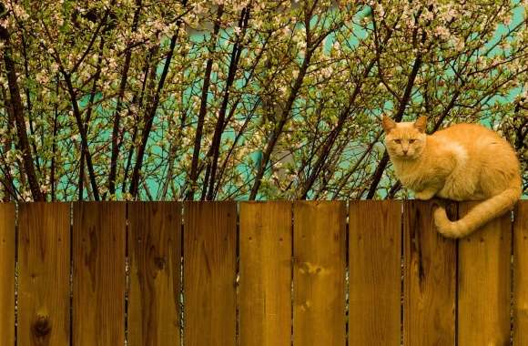 Red Cat On Fence